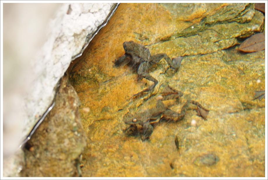 개구리1.JPG
