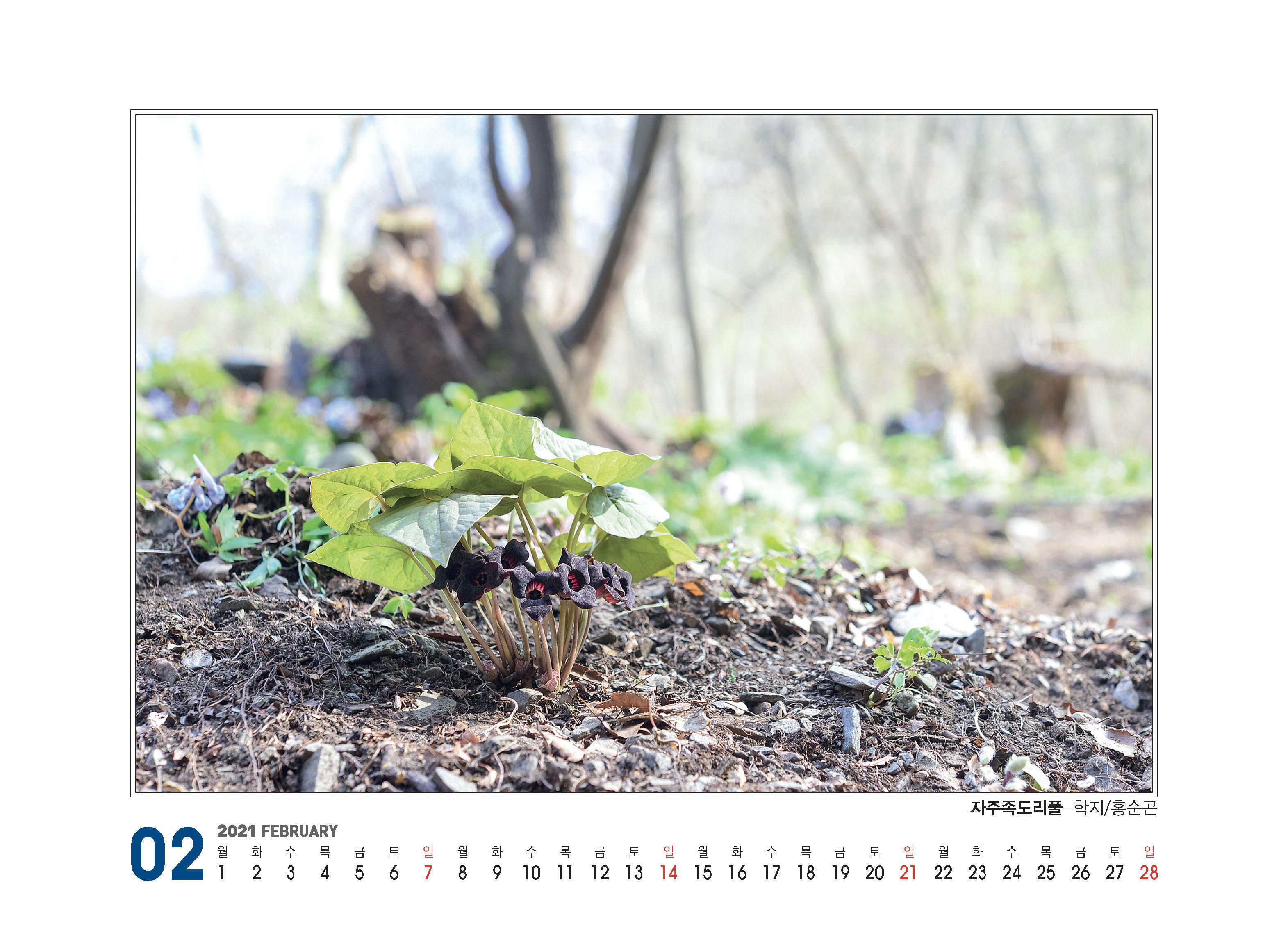 플로마카렌다(2021)260X190_페이지_07.jpg