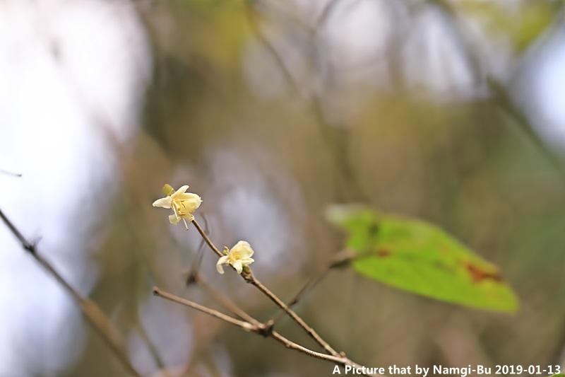 길마가지나무_0596.JPG